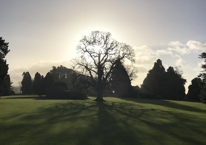 Tree at Ashridge Executive Education